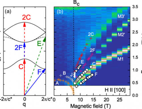 NATURE OF MAGNETIC EXCITATIONS IN THE HIGH-FIELD PHASE OF α-RuCl3